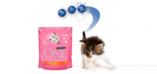 kit de bienvenida gratis de gatos con Purina One