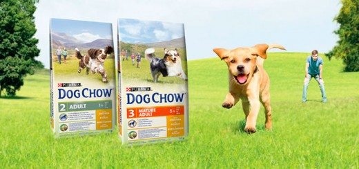 Da a probar a tus mascotas gratis Purina Dog Chow