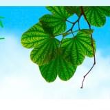 Gana un año de champú gratis de Naturaleza y Vida